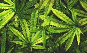 Вика конопля положительный эффект от марихуаны